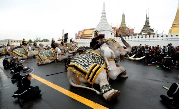 Eerbetoon aan de koning door olifanten
