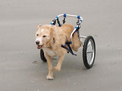 Hondenrolstoel