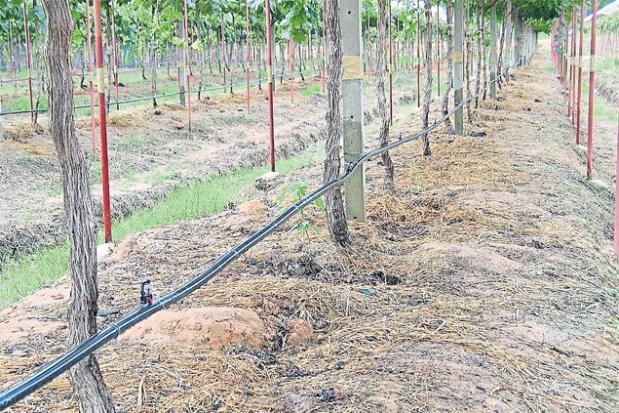 Solar drip irrigation
