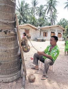 Noi Petchpradab traint een makaak