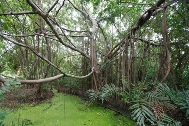 Sri Nakhon Khuean Khun Park - rijke variëteit aan bomen