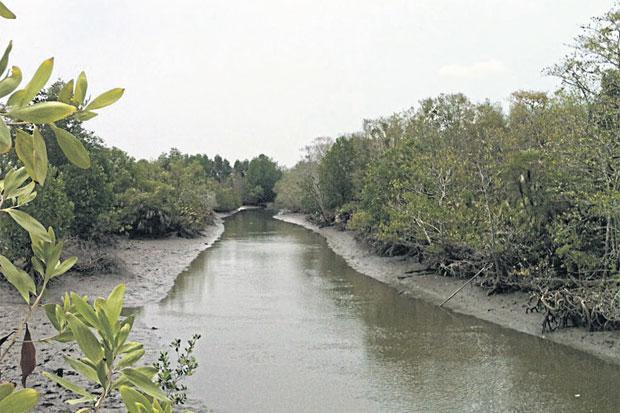 Mangrove bos in Ban Pret Nai