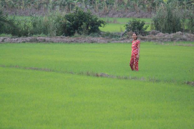 Mekong delta rijstveld in Can Tho