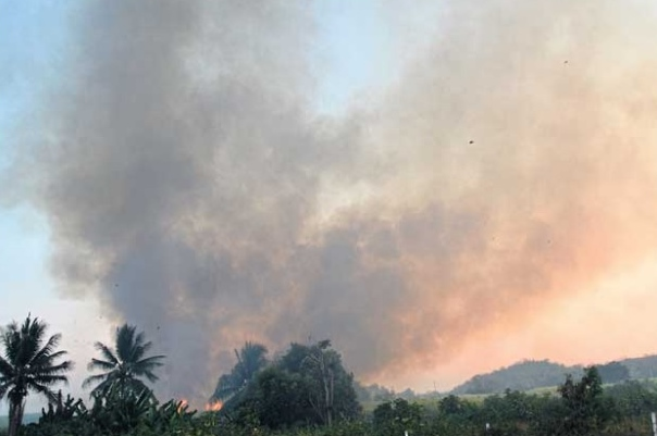 Pre-harvest burning