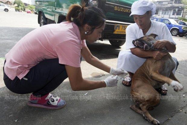 Hond krijgt injectie tegen rabies