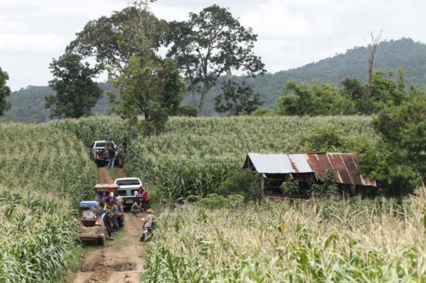 Maisvelden zogenaamd in Phu Pha Man nationaal park in Loei