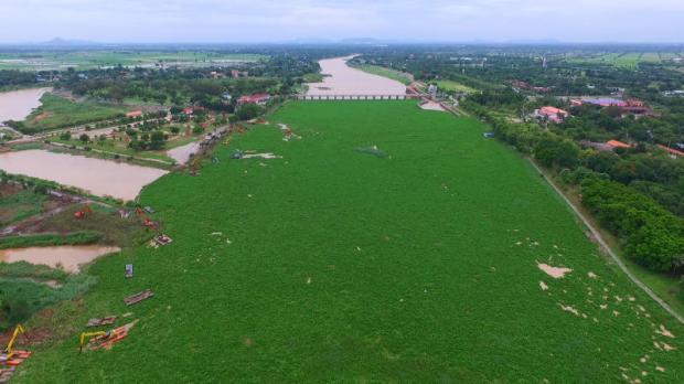 Waterhyacint bij de Chao Phraya dam