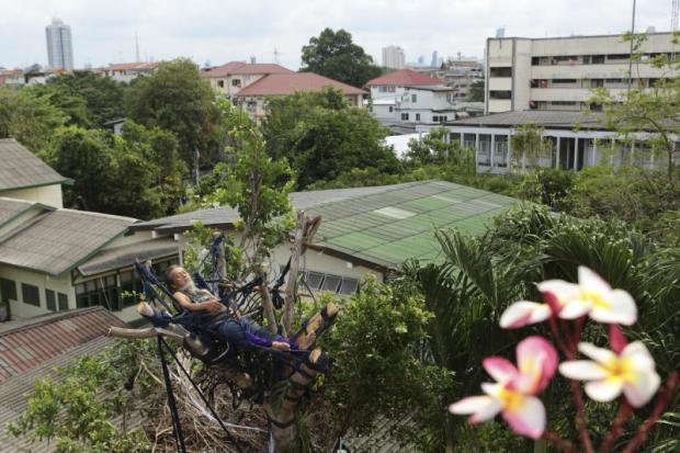 Man beschermt banyan boom