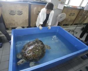 Schildpad aan beterende hand