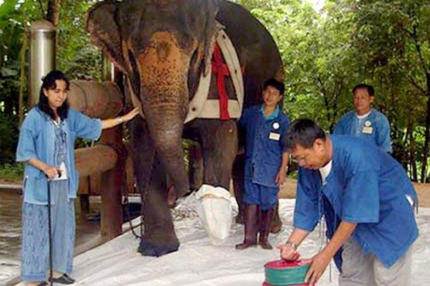 Soraida Salwala and her Friends of the Asian Elephant