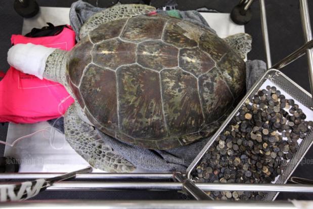 Zeeschildpad met munten in zijn maag