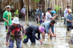 Ambtenaren en vrijwilligers planten mangrove bomen