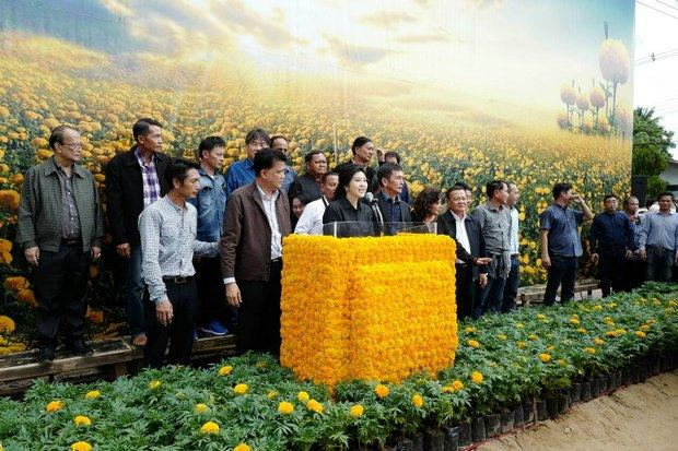 Yingluck in Ubon Ratchathani om goudsbloemen te planten