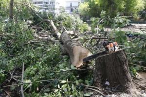 Gekapte boom in Mahakan Fort