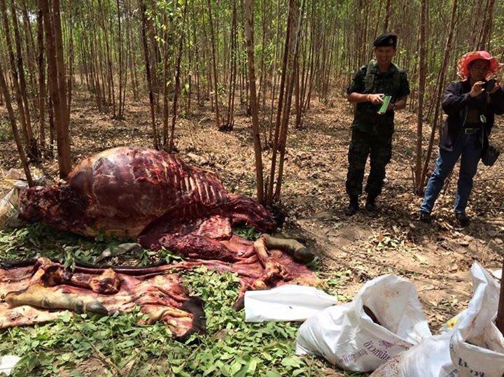restant van gestroopte dode gaur