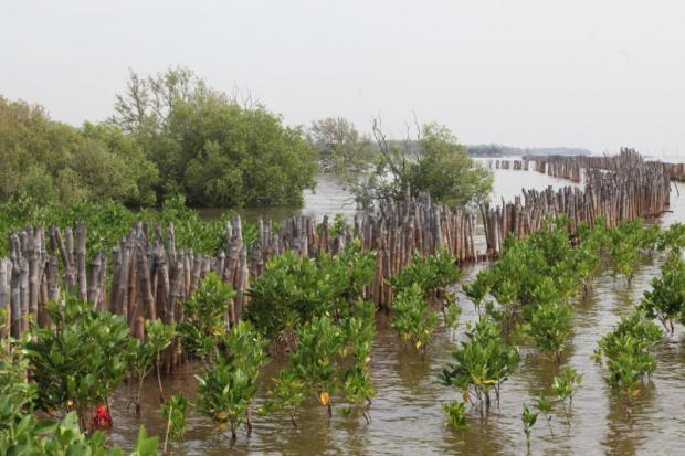 Bescherming tegen erosie met bamboe en mangrove bossen