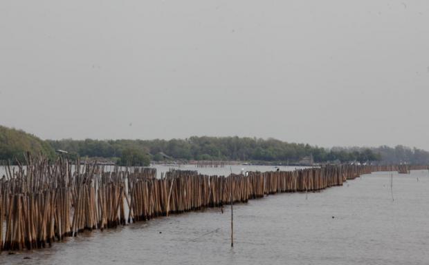 Bescherming tegen erosie met bamboepalen