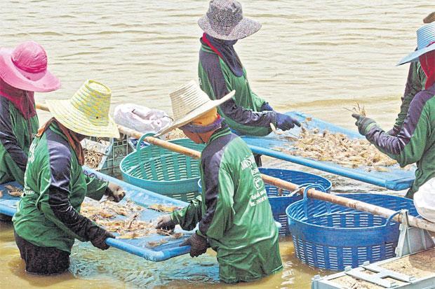 Garnalenkwekers in Samut Songkhram