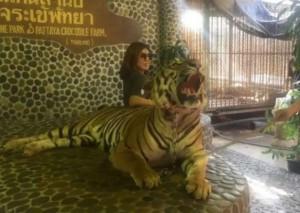 Tijger in Pattaya die geslagen wordt om te brullen